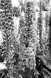 Flowers with Pokadots