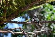 Humming Bird IV