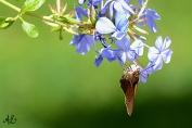 Moth and purple flower