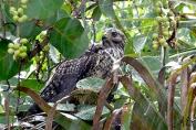 Second side Falcon