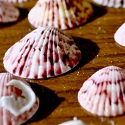 Shells on table